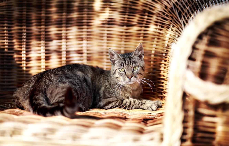 Photo wallpaper cat, cat, look, chair, garden, lies, braided