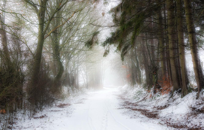 Photo wallpaper winter, nature, fog