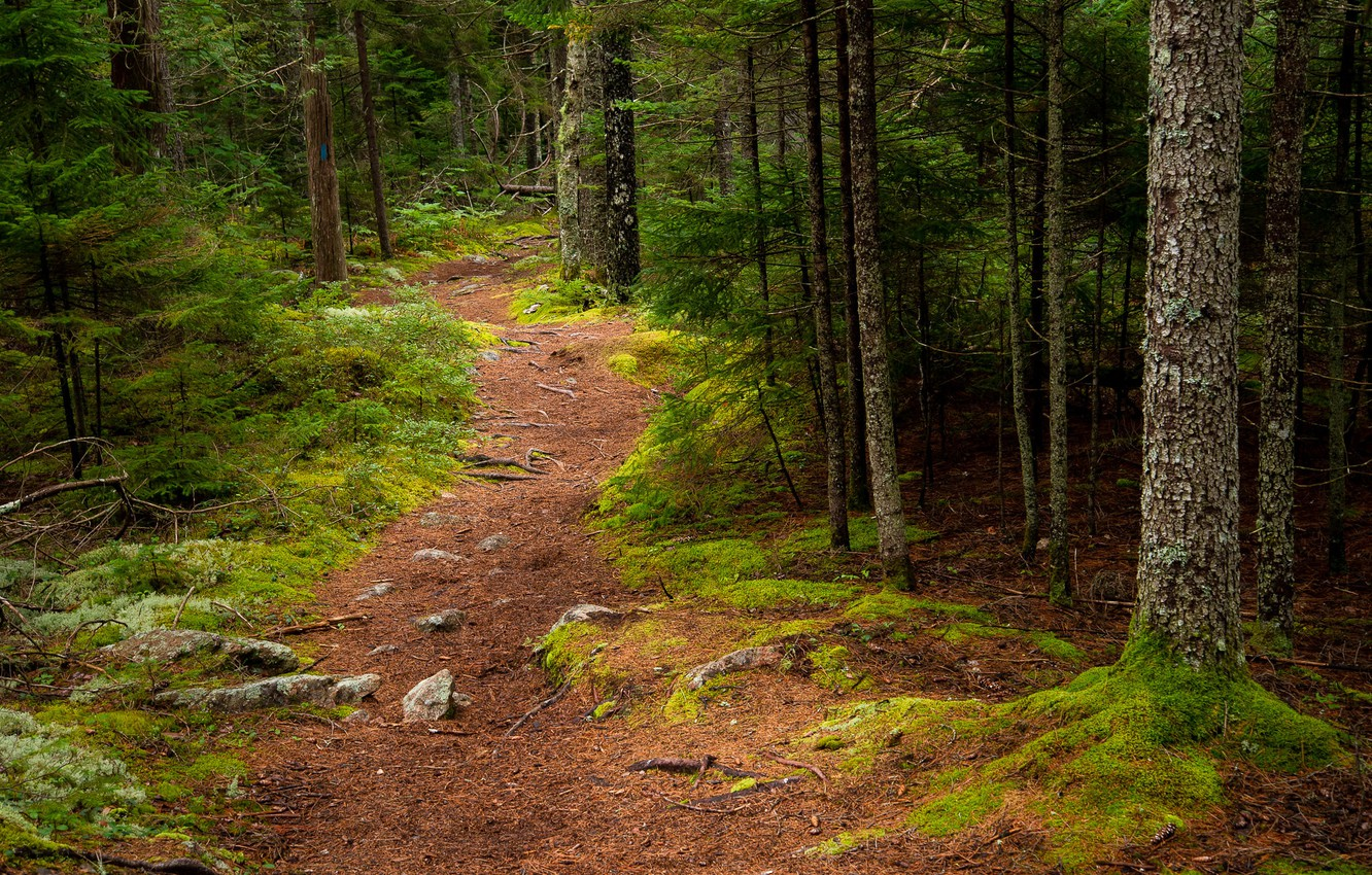 Photo wallpaper forest, trees, path, Maine, Man, Acadia National Park, Acadia national Park