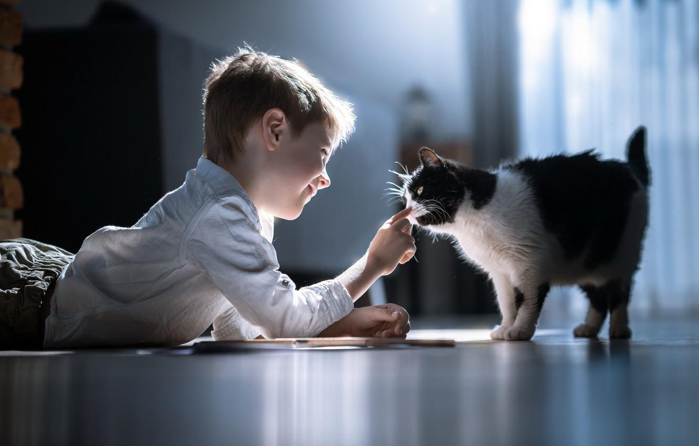 Photo wallpaper cat, comfort, boy