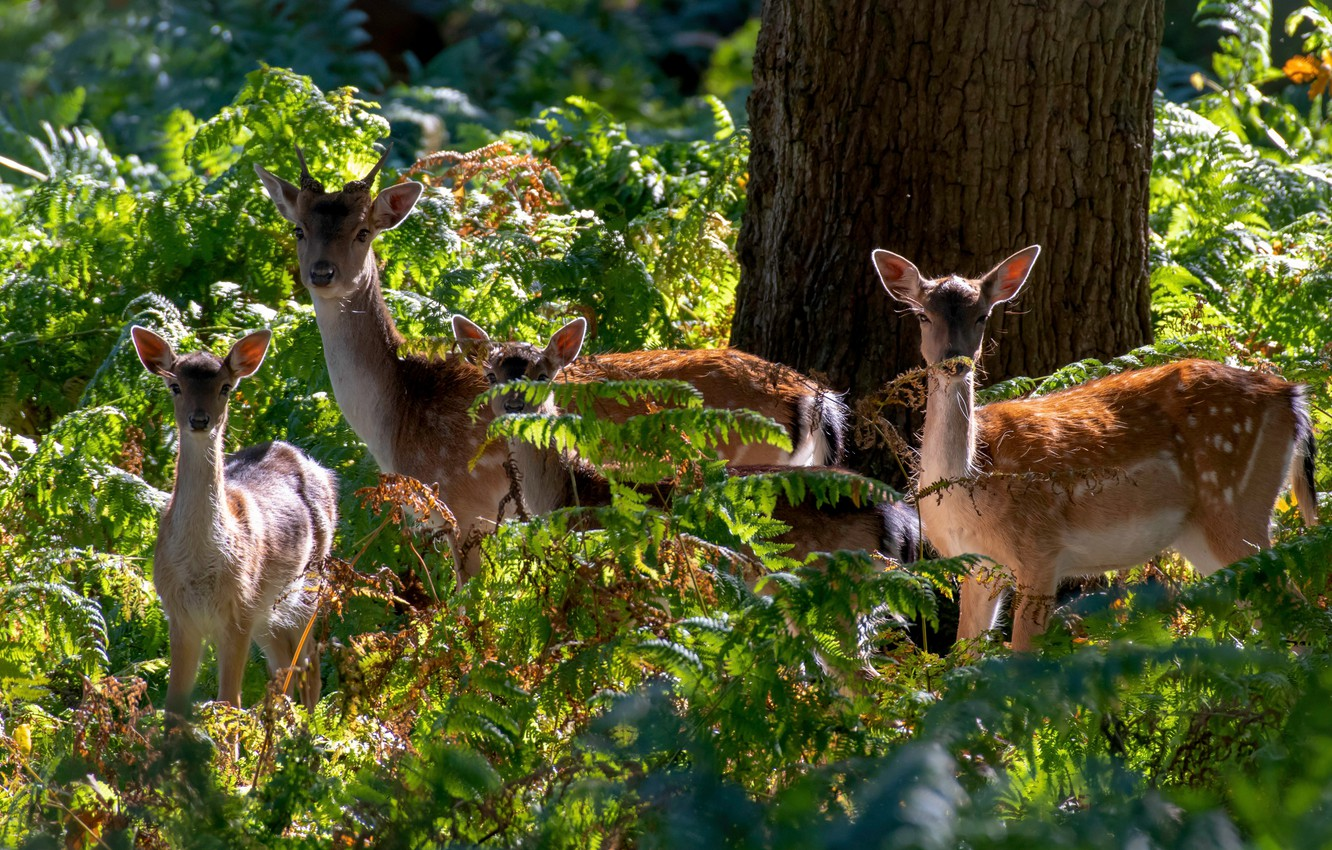 Photo wallpaper forest, light, tree, thickets, family, deer, fawn, fern, fawn, calves, DOE