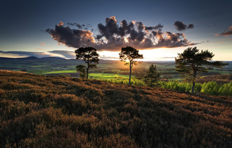 Photo wallpaper field, summer, trees, morning