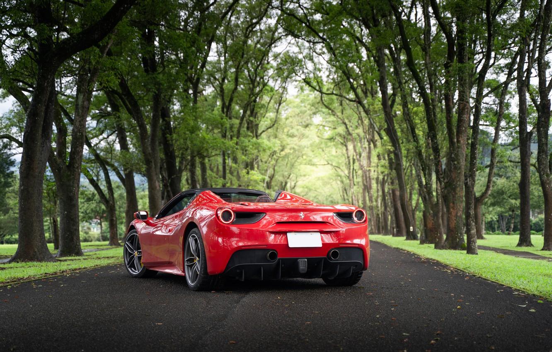 Photo wallpaper road, trees, red, sports car, Ferrari 488 Spider