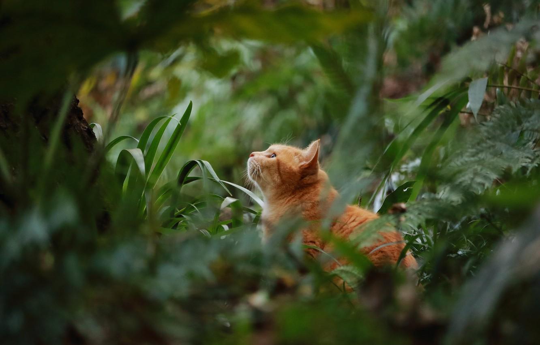 Photo wallpaper greens, cat, cat, vegetation, red, cat