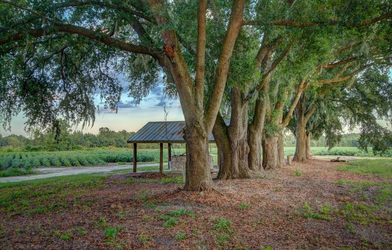 Photo wallpaper trees, nature, Park
