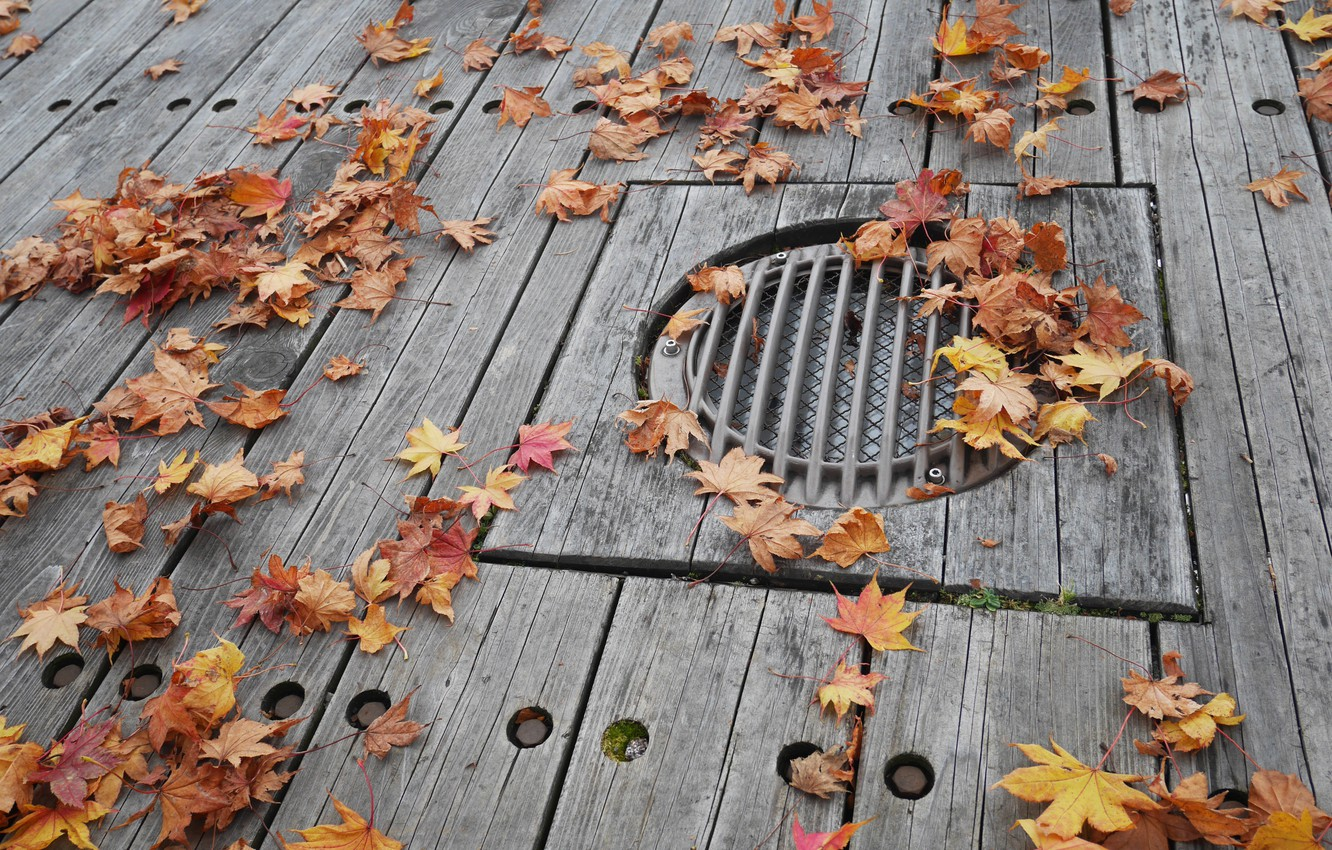 Photo wallpaper autumn, leaves, background, colorful, maple, wood, background, autumn, leaves, autumn, maple