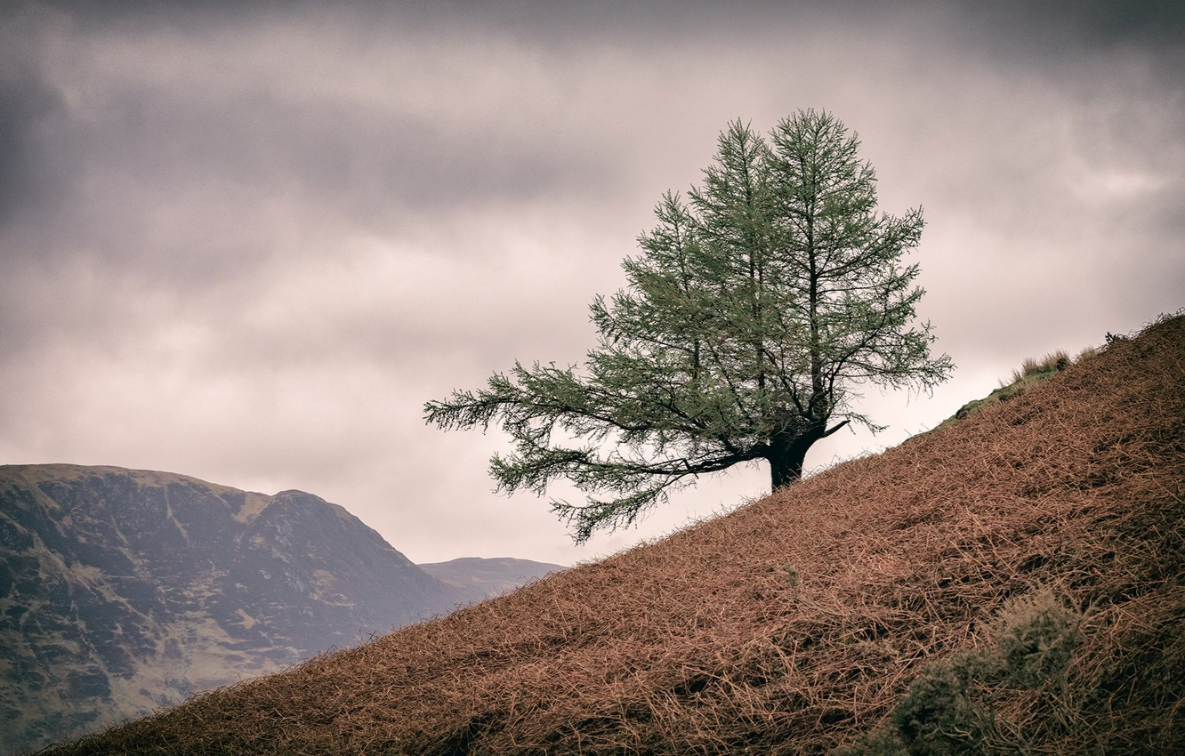 Photo wallpaper England, United Kingdom, Lake District, Lone Tree, Buttermere