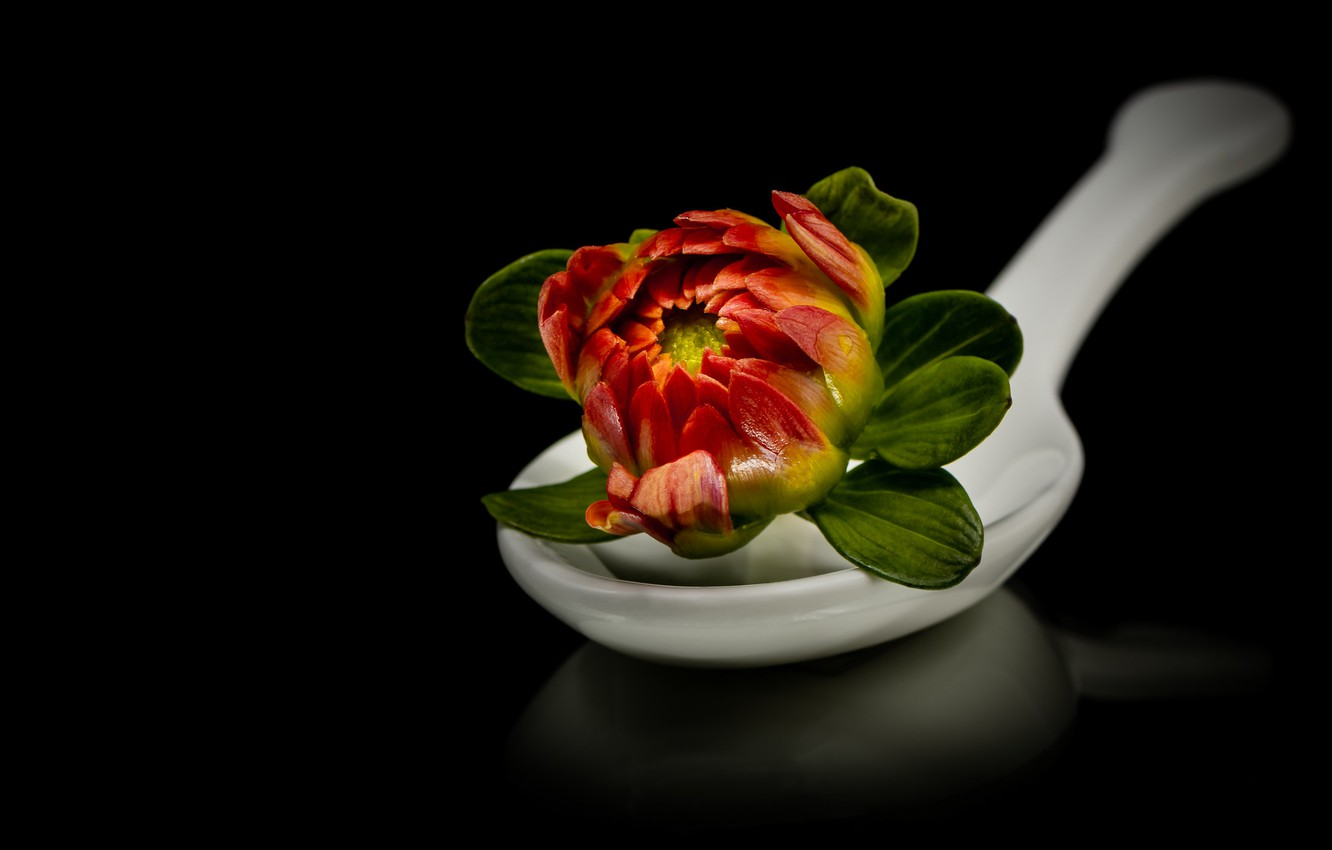 Photo wallpaper flower, reflection, spoon, black background, composition