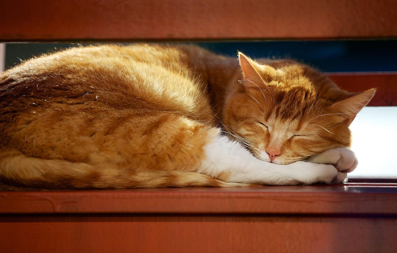 Photo wallpaper cat, cat, light, pose, stay, furniture, sleep, red, sleeping, shelf, lies, closed eyes