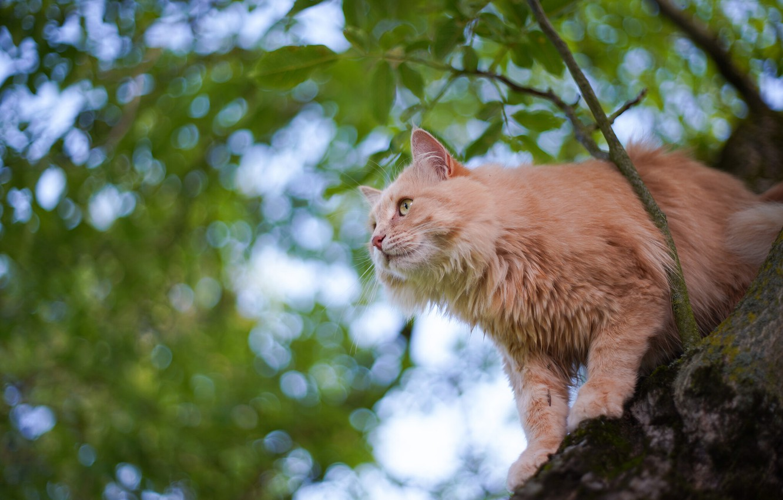 Photo wallpaper cat, cat, tree, on the tree, cat