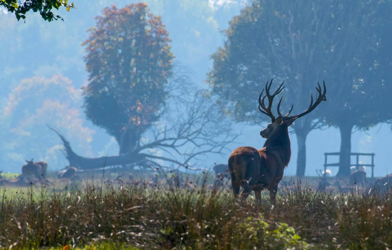 Photo wallpaper look, trees, nature, fog, deer