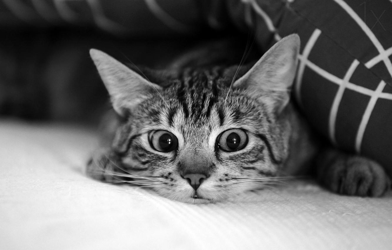 Photo wallpaper eyes, cat, mustache, eyes, cat, mustache, Antje Wenner-Brown