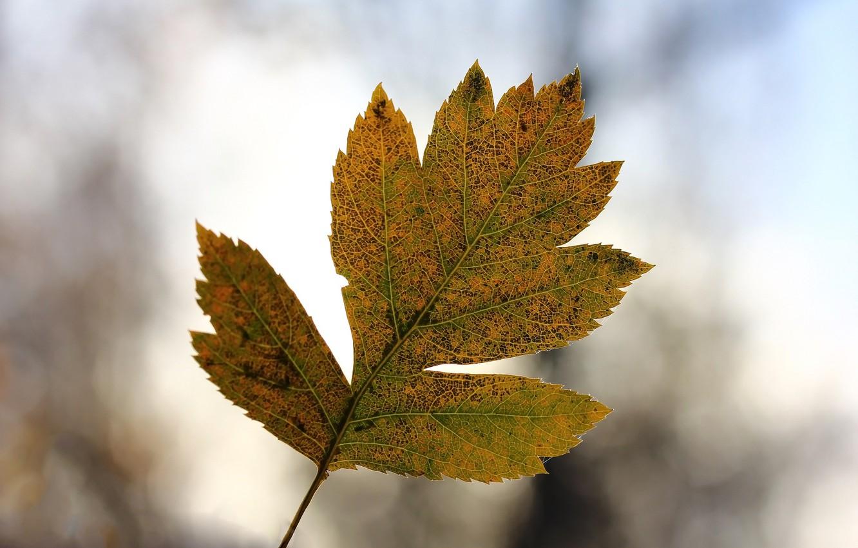 Photo wallpaper autumn, sheet, background