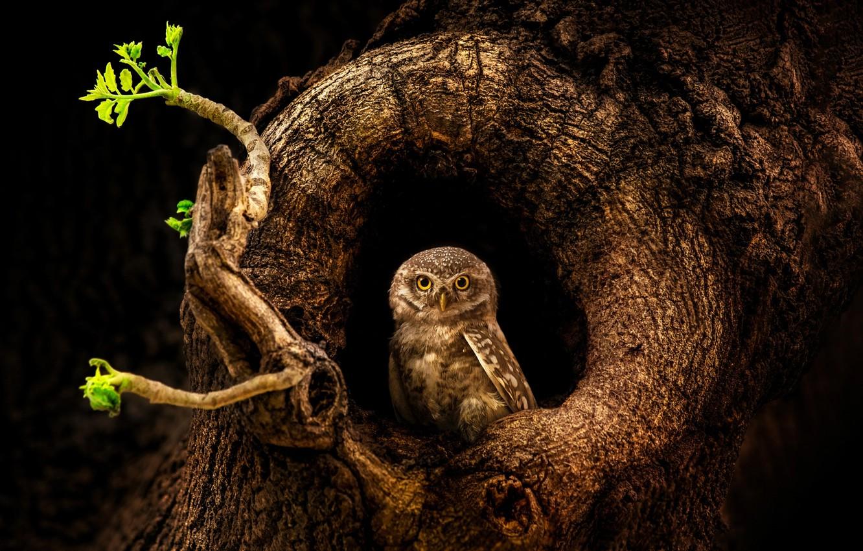 Photo wallpaper tree, owl, bird, trunk, the hollow