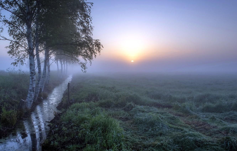 Photo wallpaper field, nature, fog
