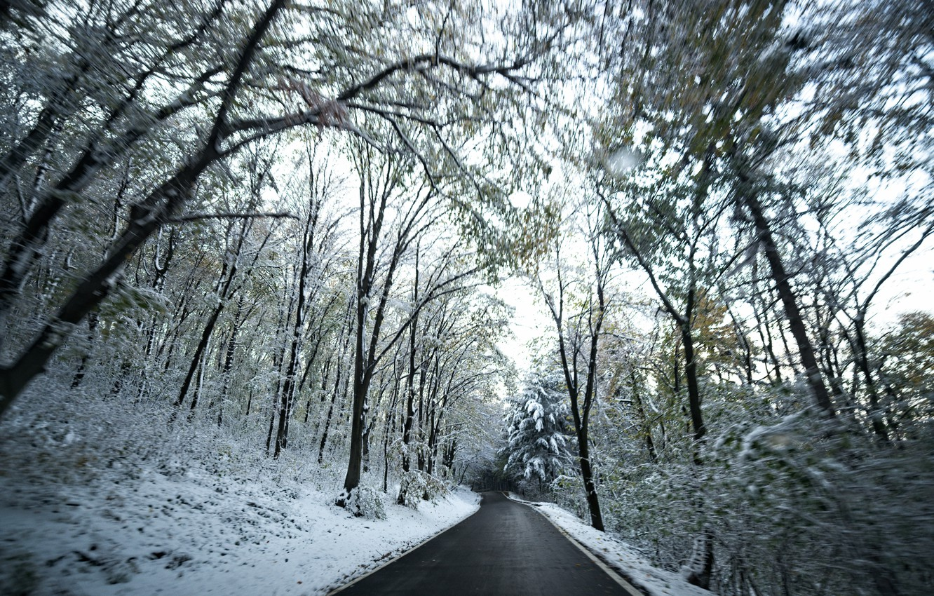 Photo wallpaper Winter, Road, Snow, Forest, Winter, Snow, Road, Forest