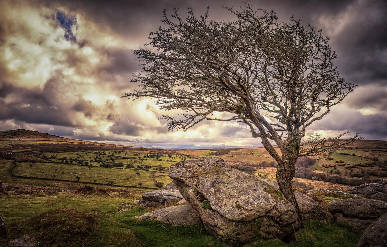 Photo wallpaper stones, tree, England, Devon