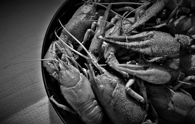 Photo wallpaper macro, black and white, claws, cancers, tarika