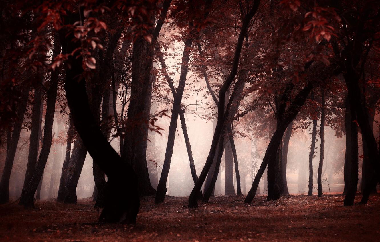 Photo wallpaper autumn, forest, trees, fog, Park, trunks, twilight