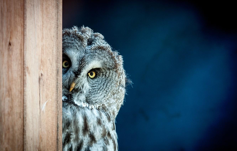 Photo wallpaper bird, look, owl