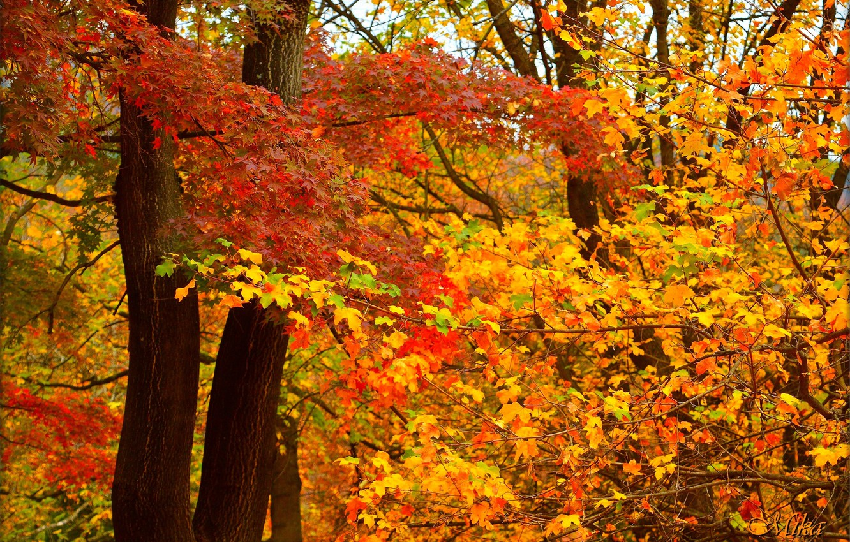 Photo wallpaper Autumn, Leaves, Fall, Autumn, Colors, Leaves
