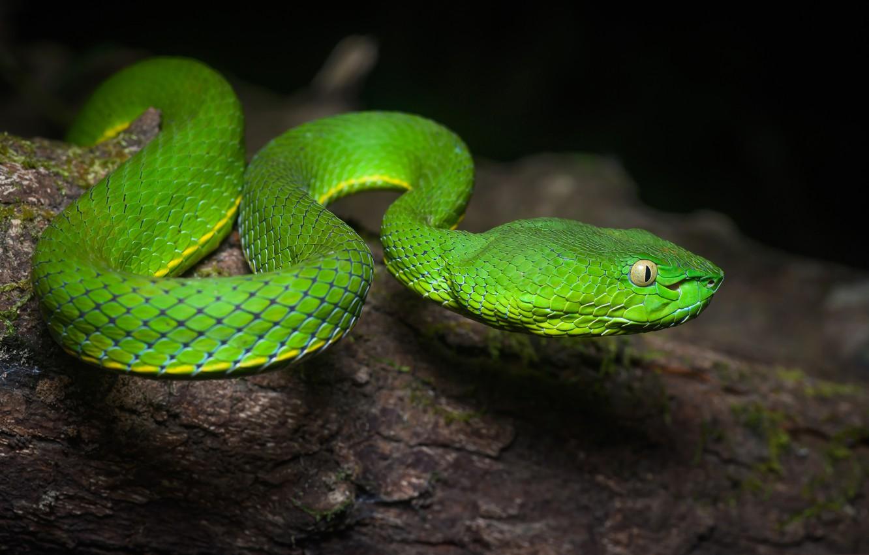 Photo wallpaper nature, snake, reptile