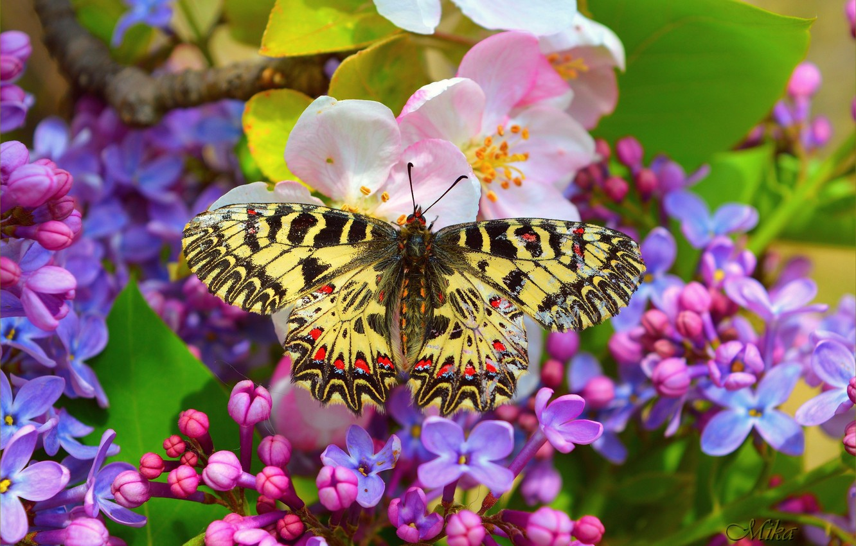 Photo wallpaper Macro, Butterfly, Flowers, Flowers, Macro, Butterfly