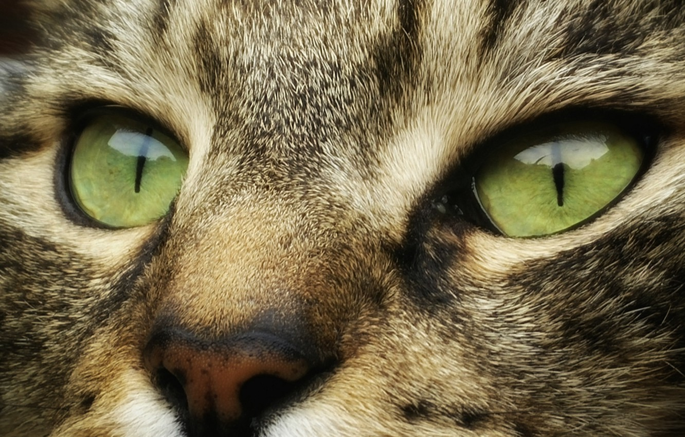 Wallpaper Wallpaper Green Eyes Animals Eyes Cat Face Cats Look Muzzle Striped 4k Ultra Hd Background Images For Desktop Section Koshki Download