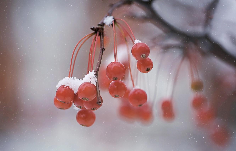 Photo wallpaper winter, macro, berries