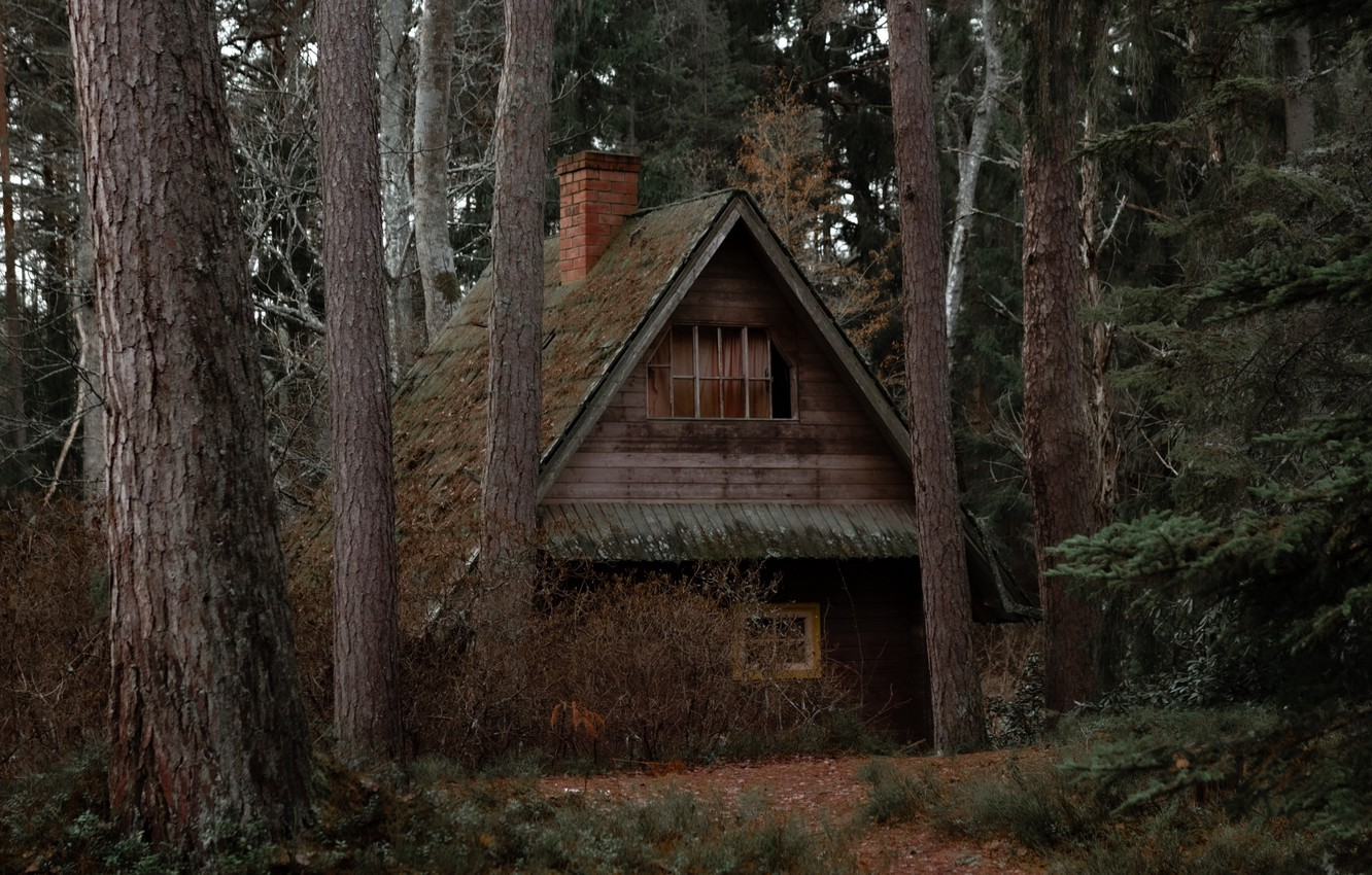 Photo wallpaper forest, trees, nature, house, house, wilderness