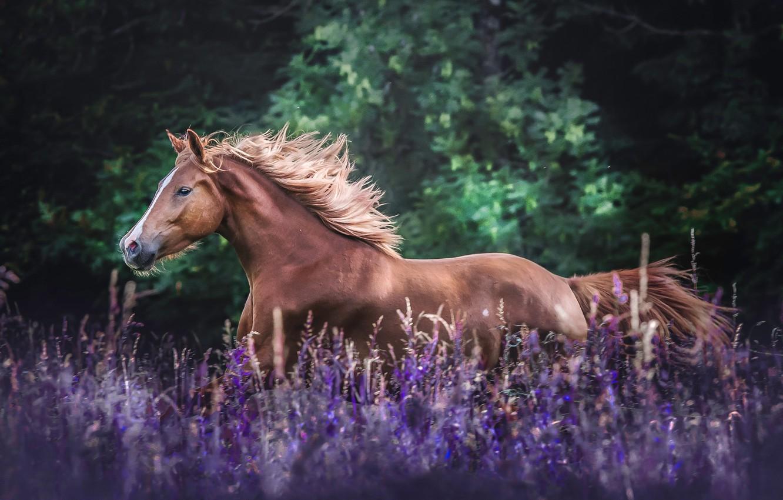Photo wallpaper field, flowers, horse, horse, meadow, mane
