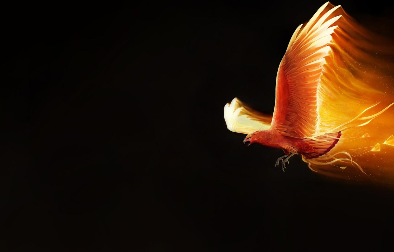 Wallpaper Minimalism Bird Fire Wings Background Fantasy