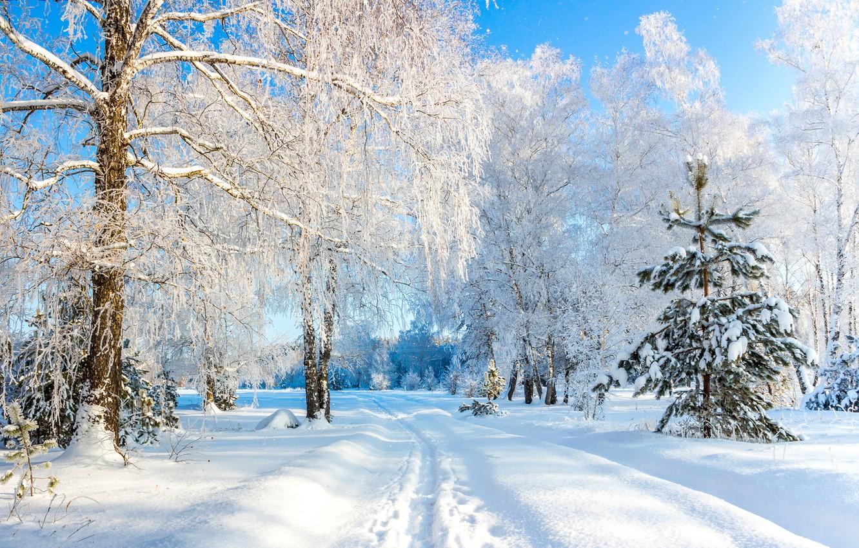 Photo wallpaper winter, snow, trees, Russia, The usmansky Bor, Voronezh oblast