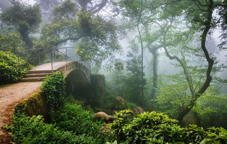 Photo wallpaper forest, bridge, haze, Portugal, Sintra
