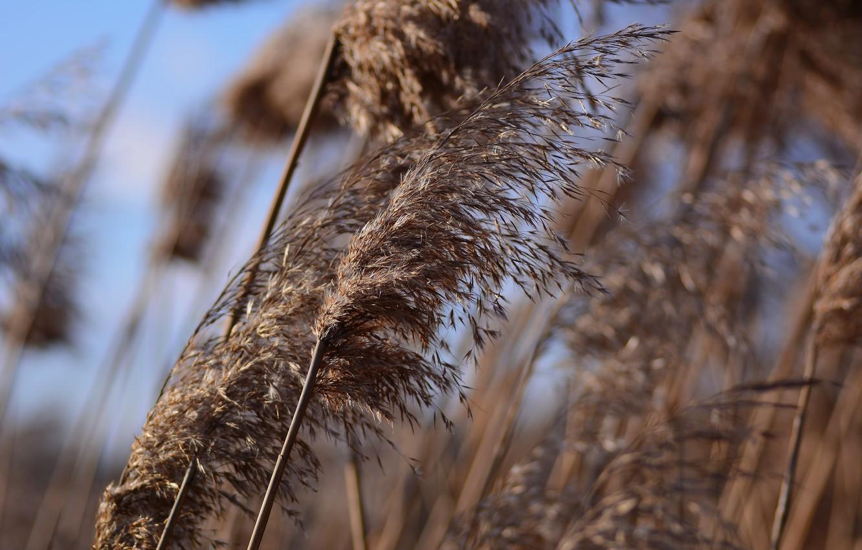 Photo wallpaper winter, grass, the wind, bokeh