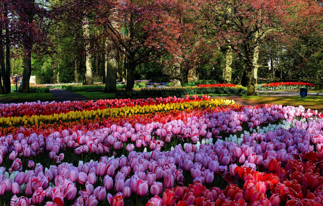 Photo wallpaper trees, flowers, Park, bright, beauty, spring, yellow, garden, tulips, red, pink, buds, flowerbed, a lot, …