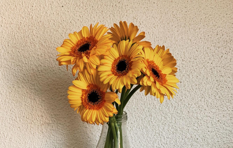Photo wallpaper flowers, wall, bouquet, gerbera