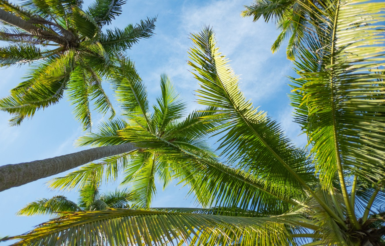 Photo wallpaper summer, the sky, the sun, palm trees, summer, beach, paradise, palms, tropical