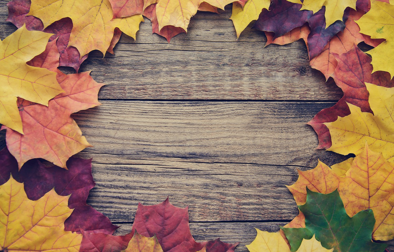 Photo wallpaper autumn, leaves, background, Board, colorful, maple, wood, autumn, leaves, frame, maple