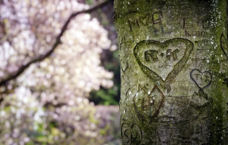 Photo wallpaper tree, heart, spring, trunk