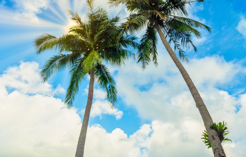 Photo wallpaper sea, beach, summer, the sky, the sun, palm trees, shore, summer, beach, sea, seascape, beautiful, …