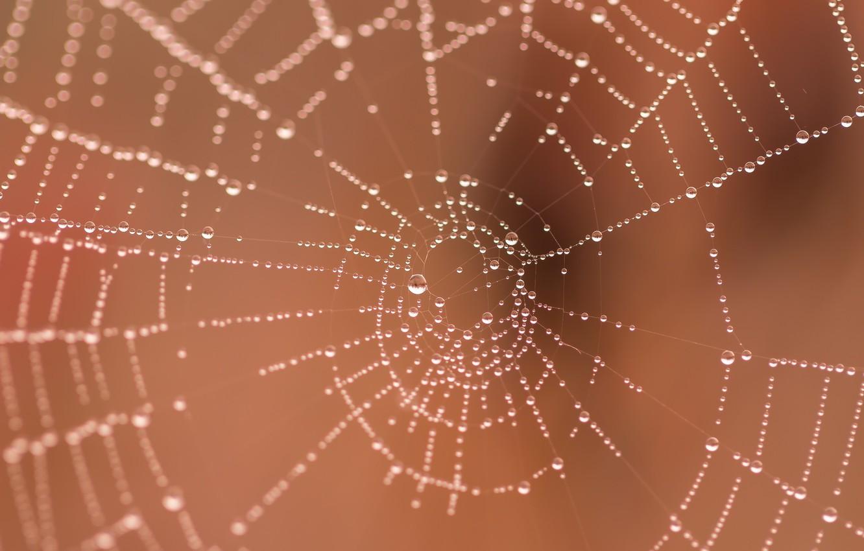 Photo wallpaper macro, web, water drops