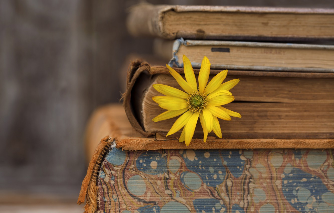 Photo wallpaper flower, background, books
