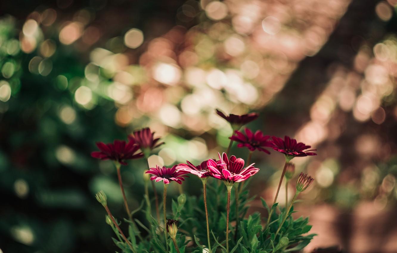 Photo wallpaper flowers, nature, red, bokeh