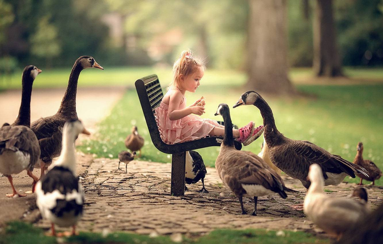 Photo wallpaper girl, bench, geese