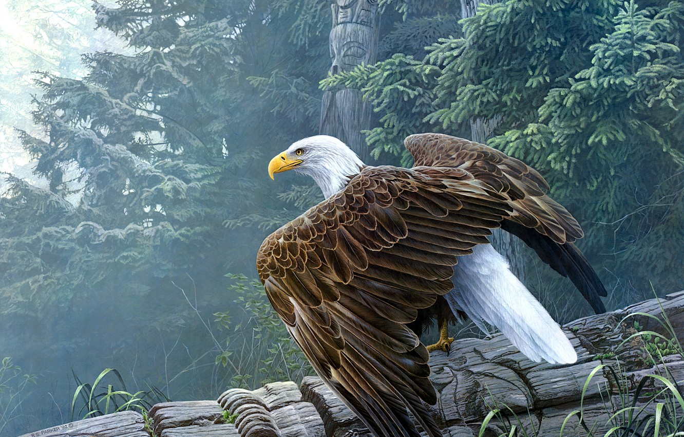 Photo wallpaper forest, look, branches, nature, fog, bird, eagle, posts, figure, graphics, wings, post, picture, ate, art, …