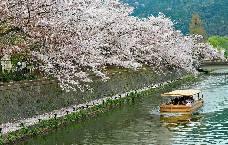 Photo wallpaper river, spring, Japan, Sakura, channel, pleasure boat