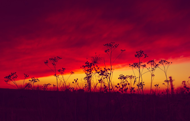Photo wallpaper grass, sunset, plant, glow