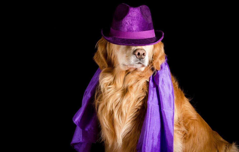 Photo wallpaper each, dog, hat