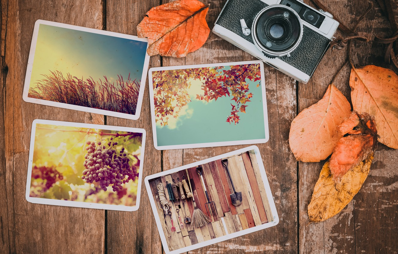 Photo wallpaper autumn, leaves, photo, background, camera, colorful, happy, wood, background, autumn, leaves, autumn